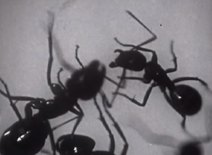 understanding ants