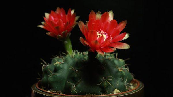 cactus southwest studio