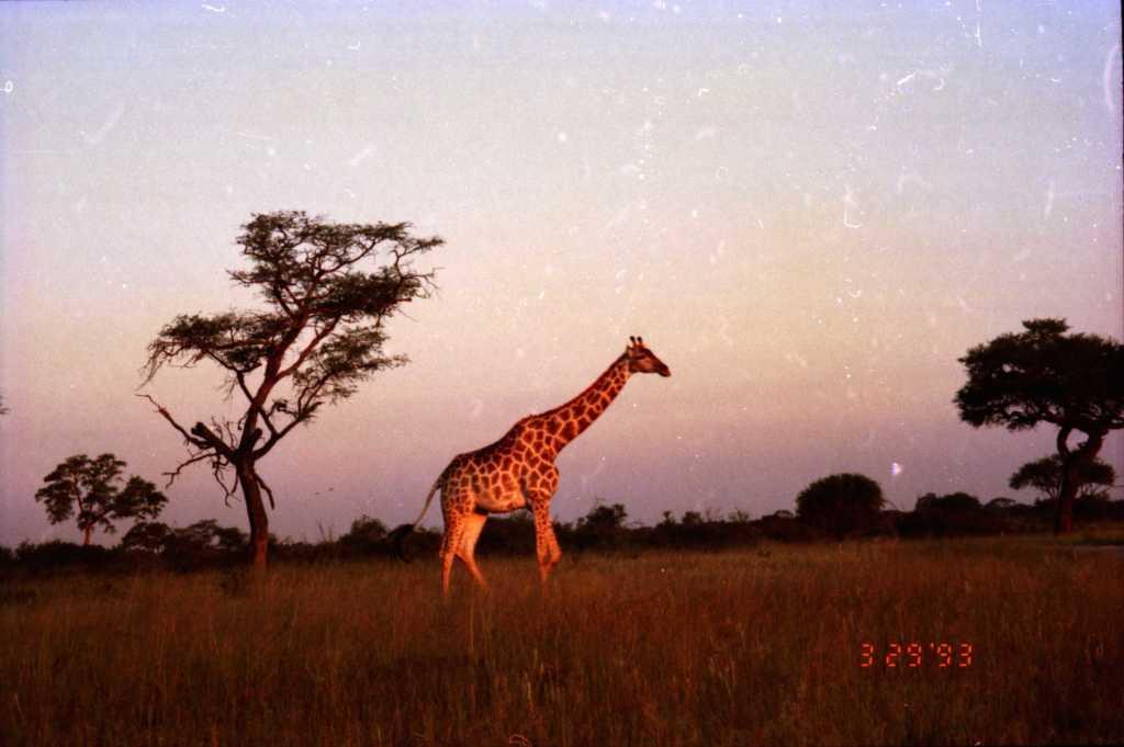 fnd africa tfarah
