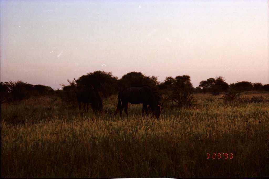 fnd africa tfarah0001
