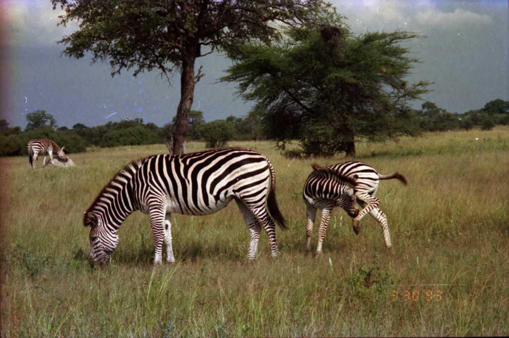 fnd africa tfarah0007