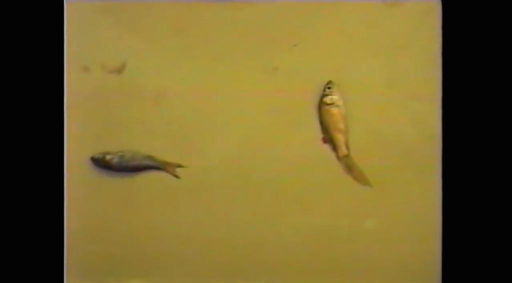 goldfish experiment